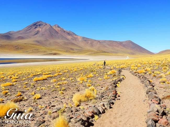 Lagunas Altiplanicas no Deseto do Atacama Chile
