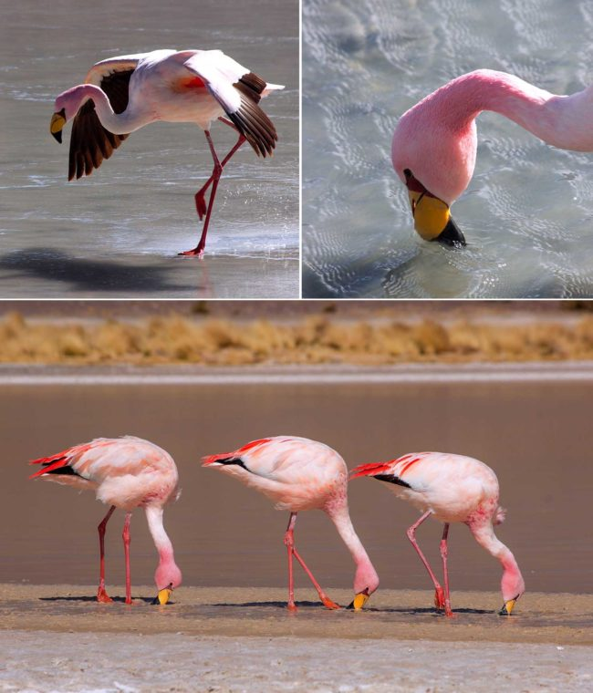 flamingos-min