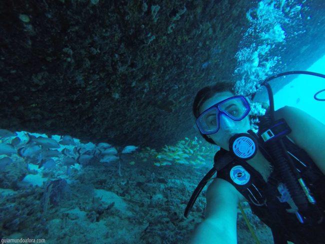 mergulho-peixes-min-650x488 Snorkel e mergulho em Barbados: fotos que vão te encantar
