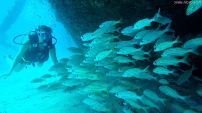 passeios em Barbados - mergulho