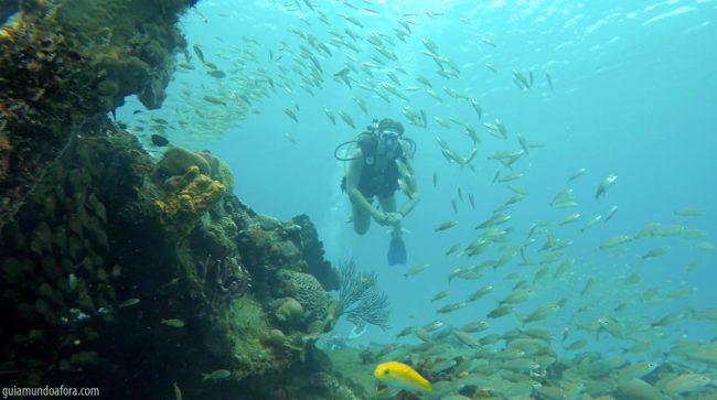 mergulho-peixes4-min-650x363 Snorkel e mergulho em Barbados: fotos que vão te encantar
