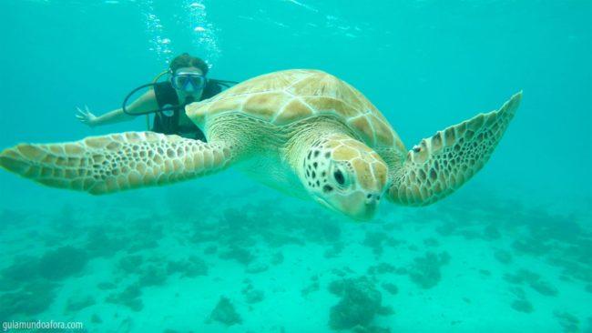 mergulho-tartarugas-min-650x366 Snorkel e mergulho em Barbados: fotos que vão te encantar