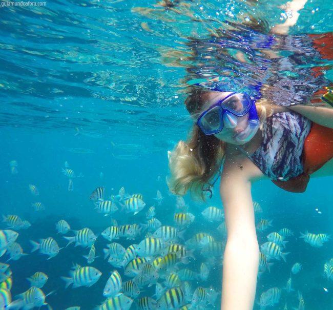 peixes-snorkel-barbados-min-650x605 Snorkel e mergulho em Barbados: fotos que vão te encantar