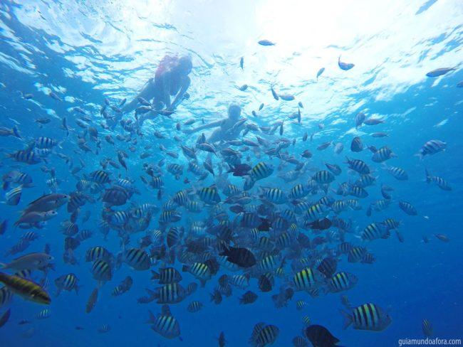 Snorkel em Barbados