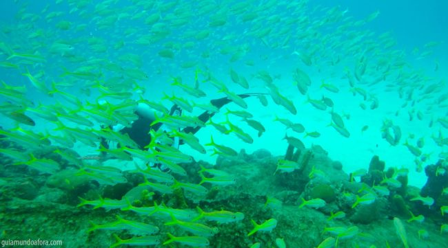peixes5-min-650x361 Snorkel e mergulho em Barbados: fotos que vão te encantar