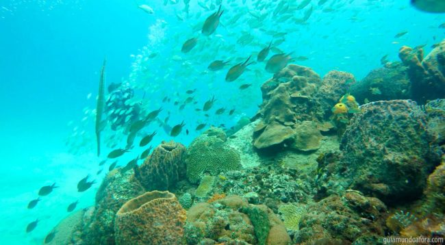 peixes6-min-650x358 Snorkel e mergulho em Barbados: fotos que vão te encantar