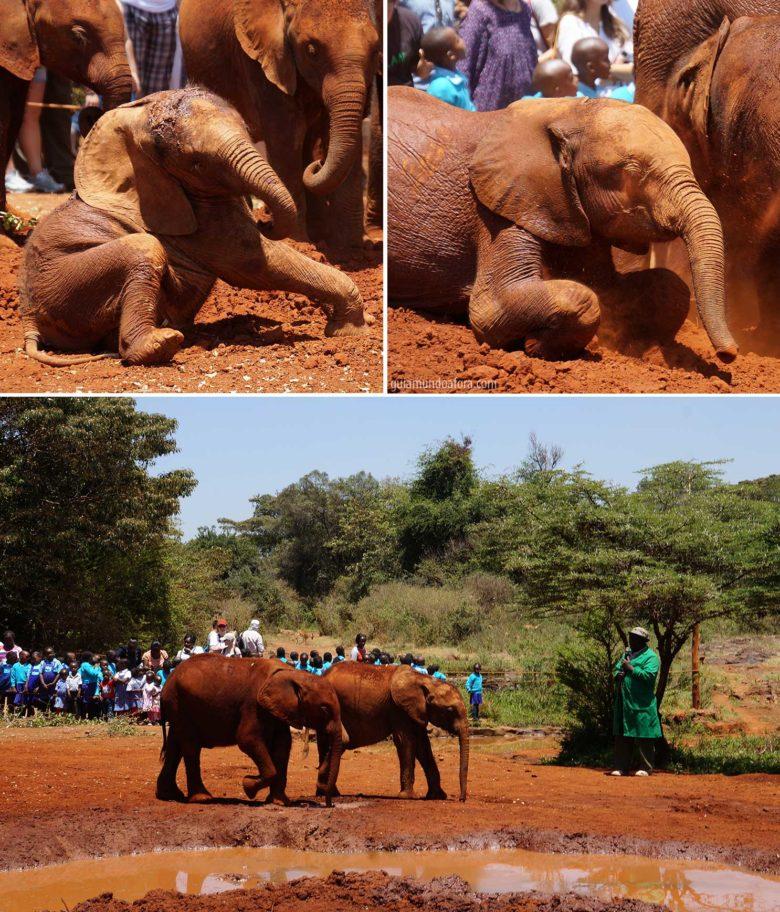 Orfanato de elefantes no Quênia