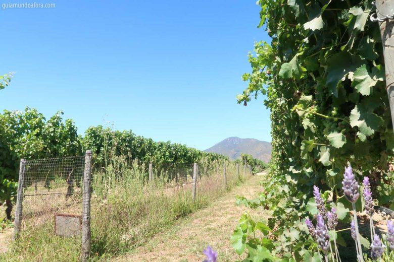 vinicolas-chile-min-780x520 Valparaiso e Vina del mar no Chile - realmente vale a pena?