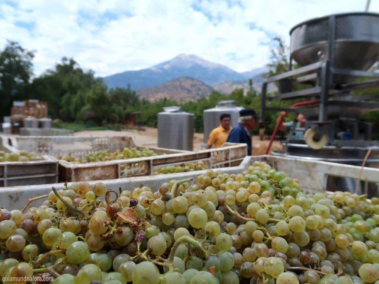 uvas-vinicola-santiago-min-780x585 Tour e almoço romântico na Vinícola El Principal em Santiago