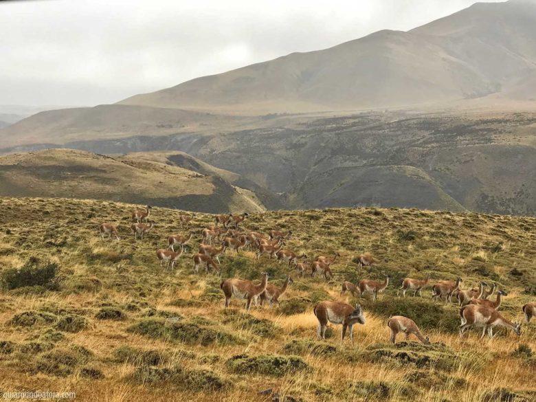 animais-torres-del-paine-min-780x585 Dicas de Torres del Paine: entenda como programar sua viagem