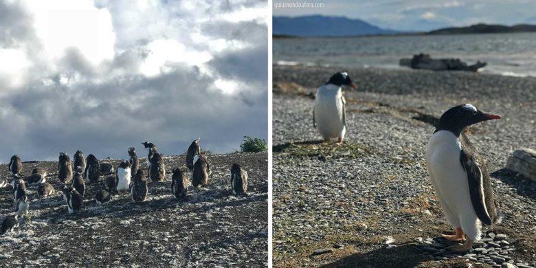pinguim-isla-martillo-min-780x390 O que fazer em Ushuaia no verão: lista de passeios imperdíveis