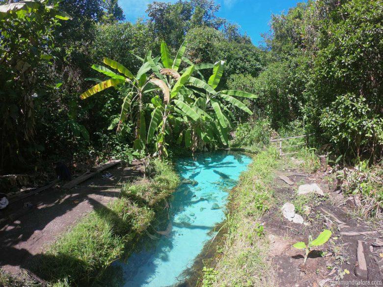 buritizinho-min-780x585 9 fotos do Jalapão de babar: principais pontos turísticos